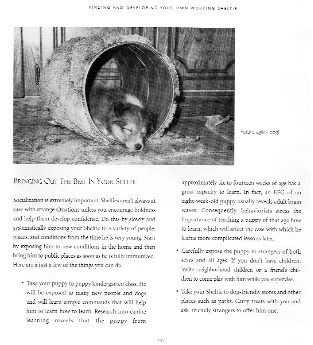 A page from Shetland Sheepdogs at Work by J. Carriera, published by Alpine Publications (www.alpinepub.com)